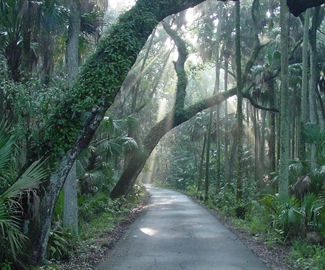 Highlands Hammock State Park in Sebring, FL courtesy of the Highlands County Visitors and Convention Bureau website